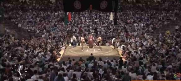 sumo-web5